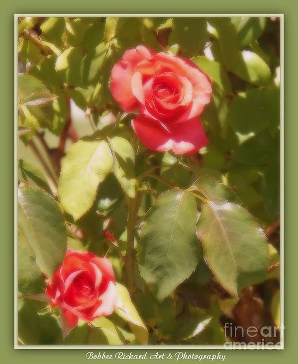 Rose Poster featuring the photograph Seeing Double by Bobbee Rickard