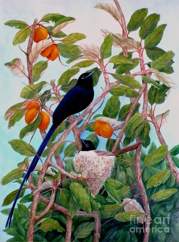 Bird Poster featuring the painting Seychelles Paradise Flycatcher by Janet Summers-Tembeli