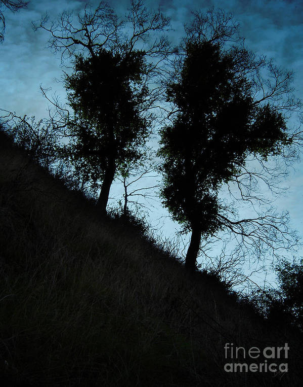 Nature Poster featuring the photograph Shadowlands 8 by Peter Awax