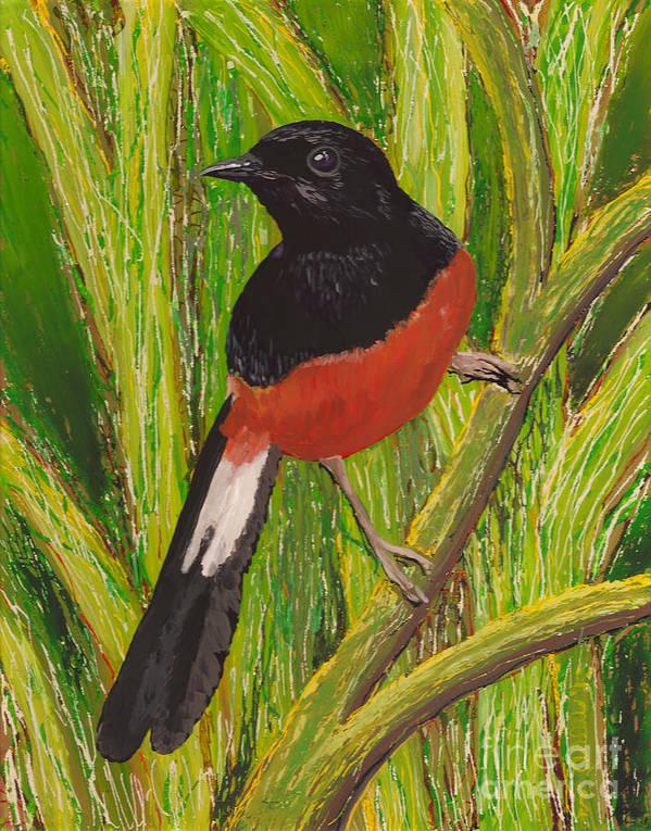 Hawaii Birds Poster featuring the painting Shama by Anna Skaradzinska
