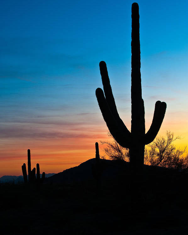 Cactus Poster featuring the photograph Silhouettes by Paul Johnson