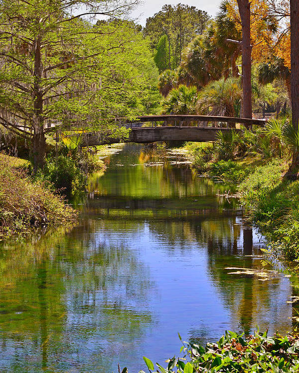 Silver Poster featuring the photograph Silver Springs Florida by Christine Till