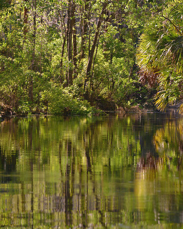 Silver Poster featuring the photograph Silver Springs Nature Park Florida by Christine Till