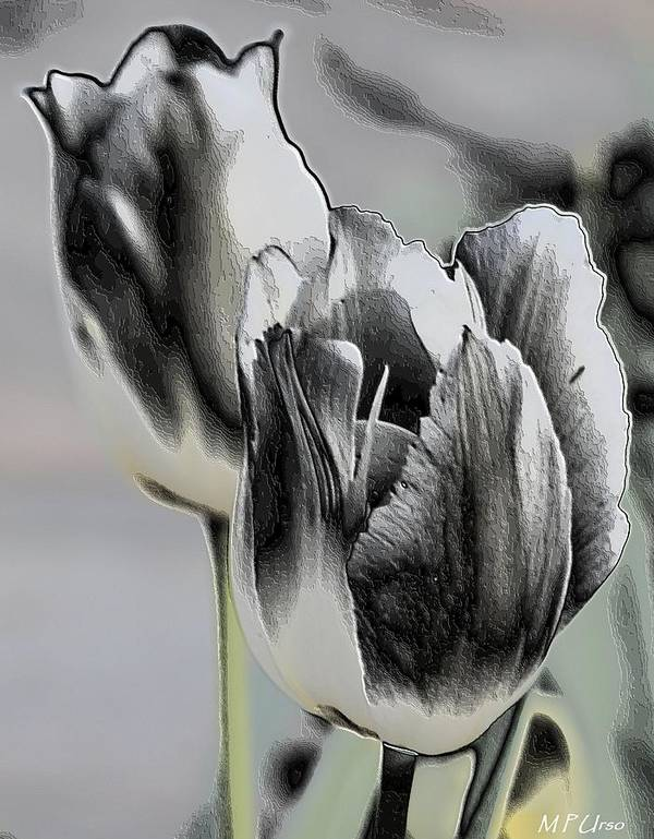 Silver Tulips Poster featuring the digital art Silver Tulips by Maria Urso