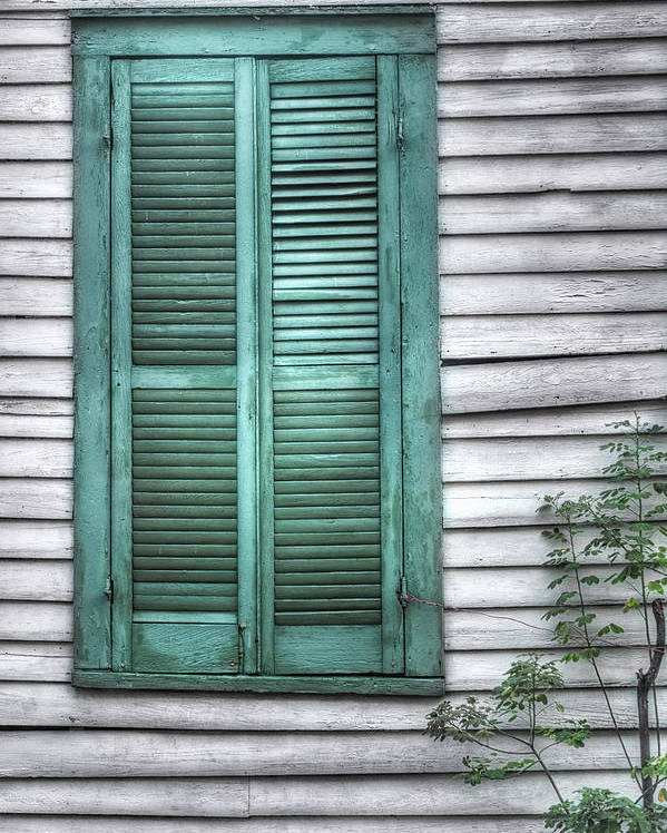 Window Poster featuring the photograph Simply Green by Brenda Bryant