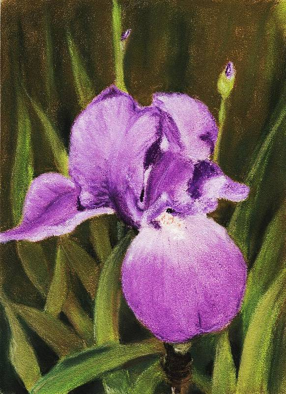 Plant Poster featuring the painting Single Iris by Anastasiya Malakhova