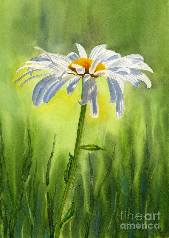Watercolor Shasta Daisies Poster featuring the painting Single White Daisy by Sharon Freeman