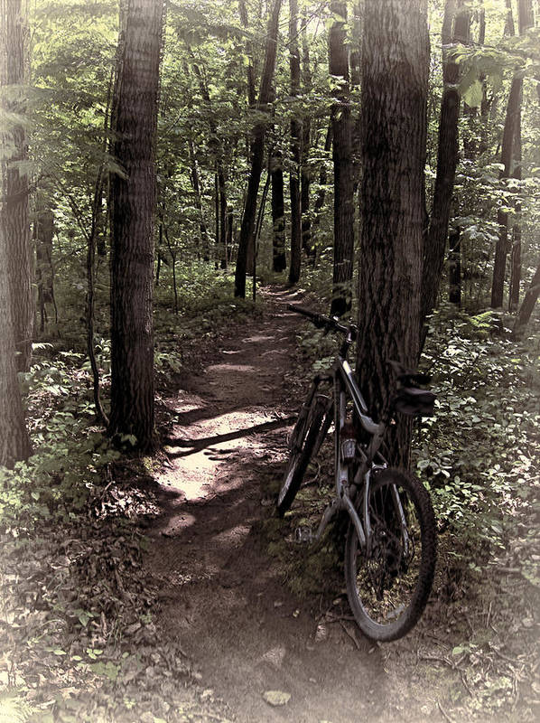 Bicycle Poster featuring the photograph Singletrack Dreams by Tom Winfield