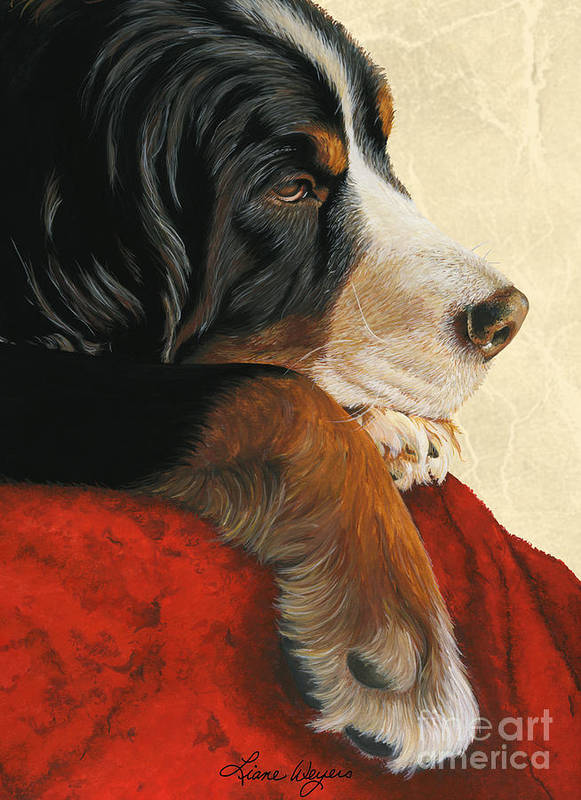 Bernese Mountain Dog Poster featuring the painting Slumber by Liane Weyers