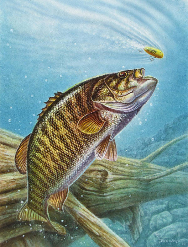 Jon Q Wright Poster featuring the painting Smallmouth Bass by JQ Licensing