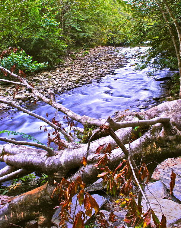 Smoky Mountains Poster featuring the photograph Smoky Mountain Stream Two by Frozen in Time Fine Art Photography