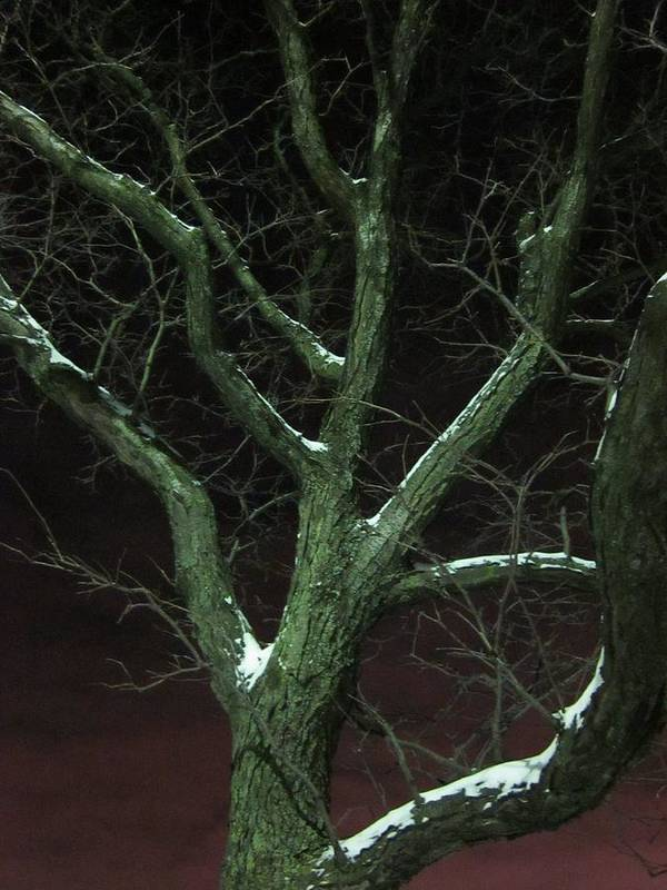 Guy Ricketts Photography Poster featuring the photograph Snowy Branches by Guy Ricketts
