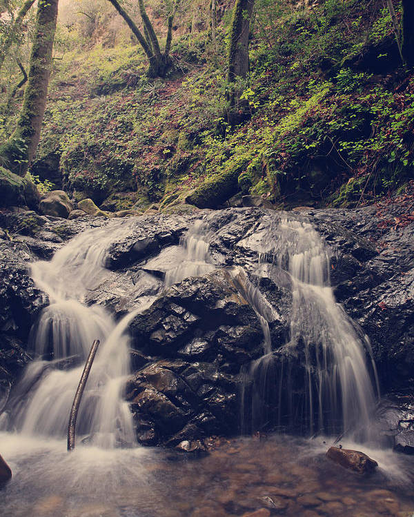 Uvas Canyon County Park Poster featuring the photograph So Easy To Fall by Laurie Search