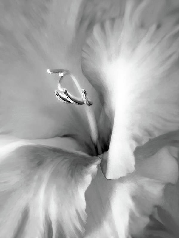 Gladiola Poster featuring the photograph Soft Silver Gladiola Floral by Jennie Marie Schell