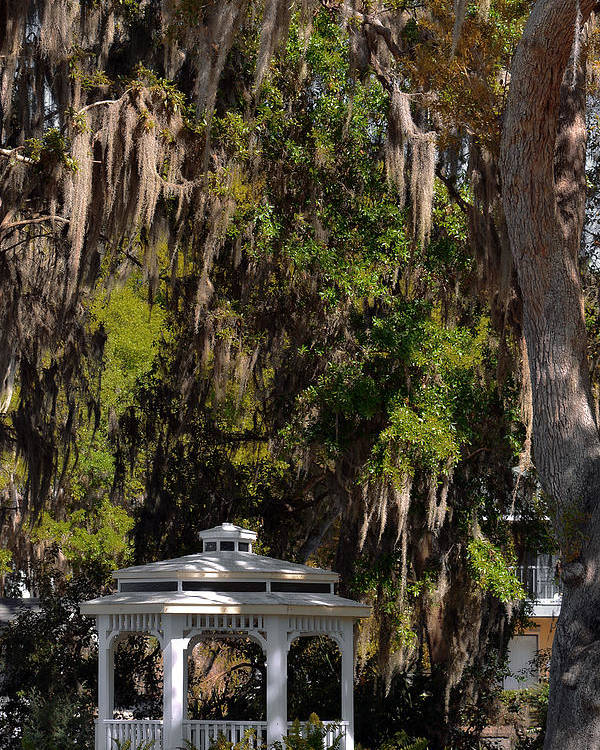 Mount Poster featuring the photograph Southern Gothic In Mount Dora Florida by Christine Till