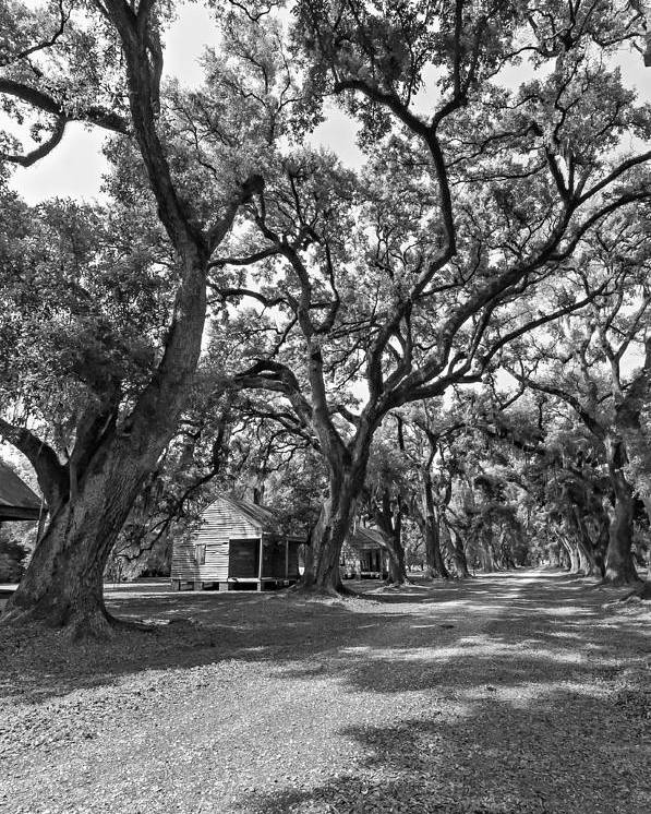 Evergreen Plantation Poster featuring the photograph Southern Lane Monochrome by Steve Harrington