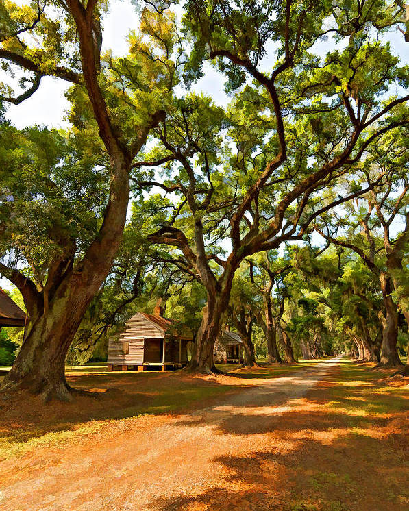 Evergreen Plantation Poster featuring the photograph Southern Lane Paint Filter by Steve Harrington