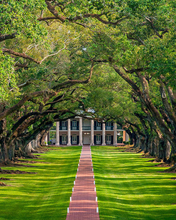 Oak Alley Plantation Poster featuring the photograph Southern Time Travel by Steve Harrington