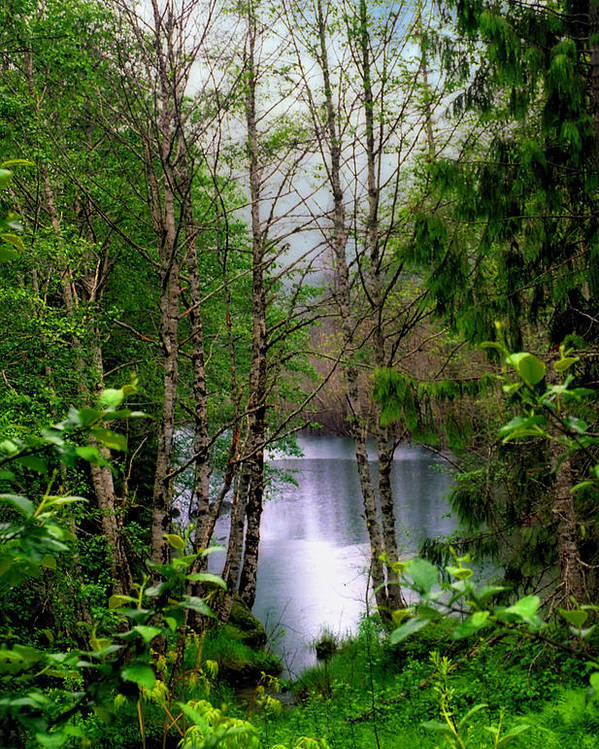 Spada Lake Washington State Pacific Northwest Water Landscape Woods Forest Trees Nature Vertical Leaves Reflections Peaceful Wilderness Cascade Mountains Poster featuring the digital art Spada Lake by Helen Roach