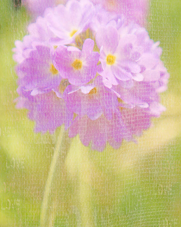 Flowers Poster featuring the photograph Sphere Florale - 01tt01a by Variance Collections