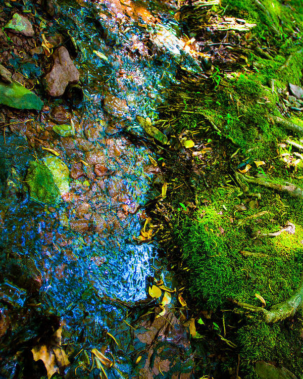 Nature Poster featuring the photograph Spring 2 by Jill DeSousa