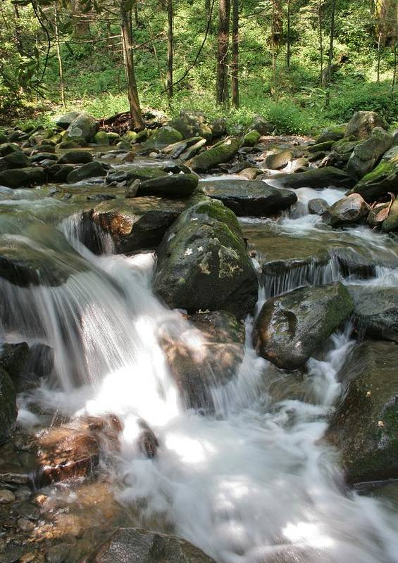 Smoky Mountains Poster featuring the photograph Springtime Stream by Tammy Davis