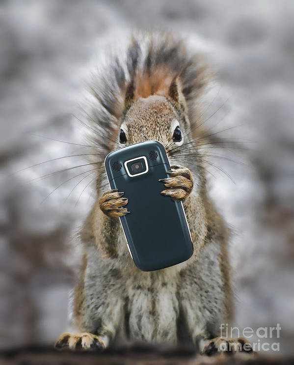 Cell Poster featuring the photograph Squirrel With Cellphone by Mike Agliolo