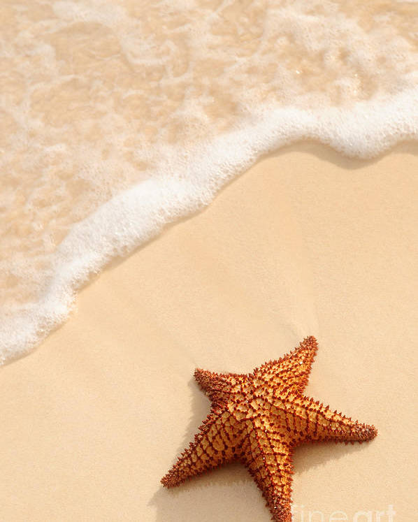 Starfish Poster featuring the photograph Starfish And Ocean Wave by Elena Elisseeva