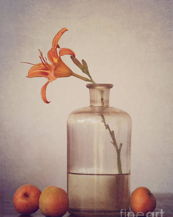 Still Life Poster featuring the photograph Still Life With Apricots by Diana Kraleva