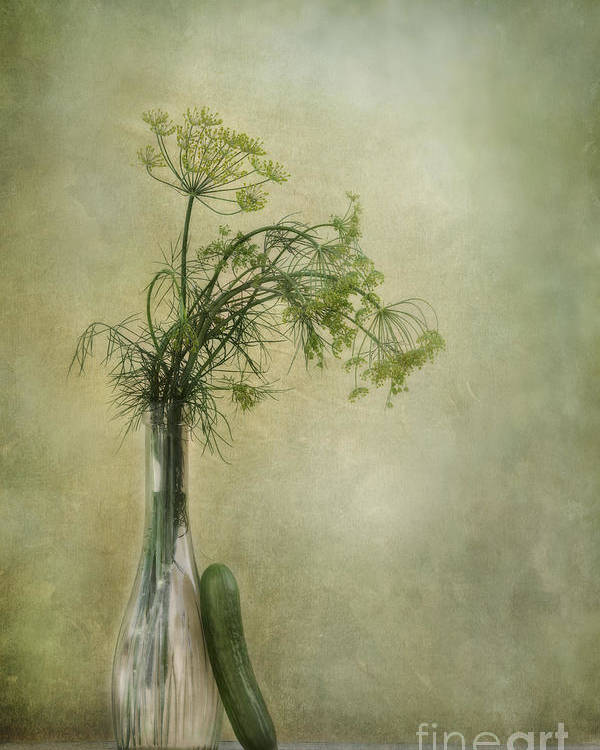 Dill Poster featuring the photograph Still Life With Dill And A Cucumber by Priska Wettstein