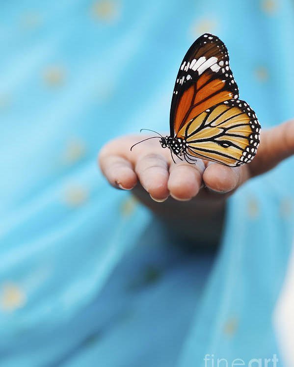 Indian Girl Poster featuring the photograph Striped Tiger Butterfly by Tim Gainey