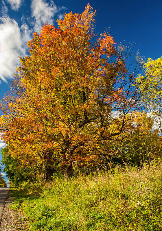 Ontario Poster featuring the photograph Sugar Maple 3 by Steve Harrington