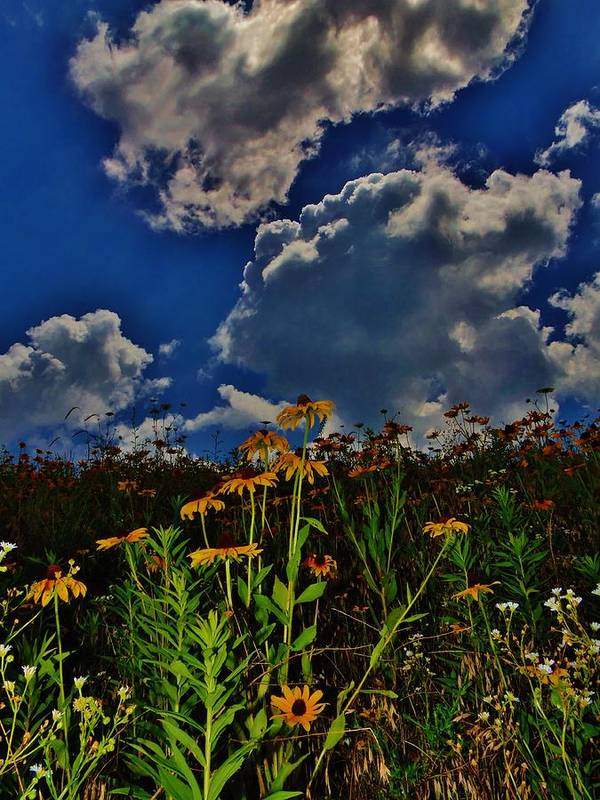 Nature Poster featuring the photograph Summer Wildflowers by Greg Kear