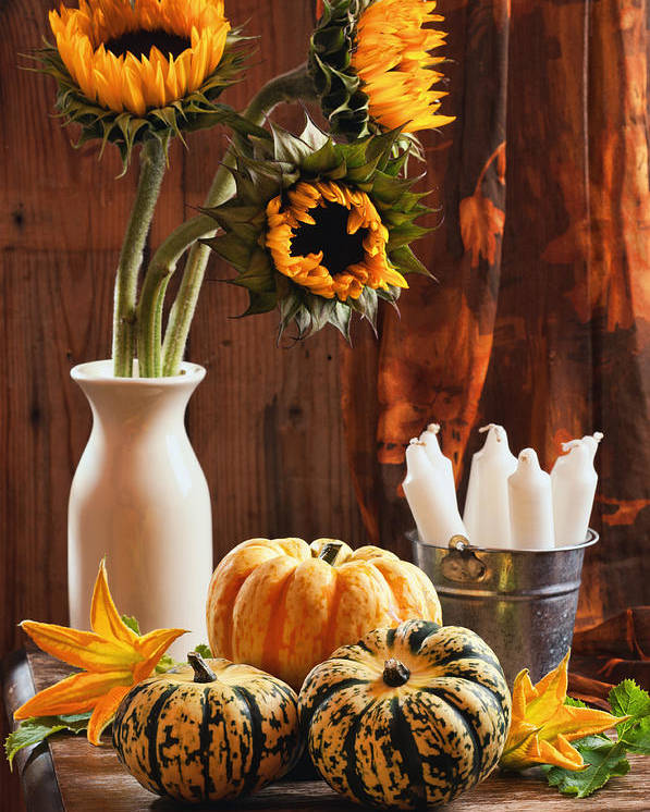 Pumpkin Poster featuring the photograph Sunflower And Gourds Still Life by Amanda Elwell