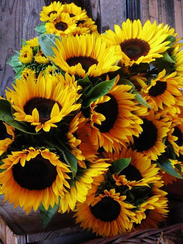 Sunflowers Poster featuring the photograph Sunflowers by Mimi Saint DAgneaux