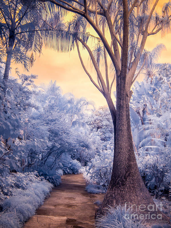 Infrared Poster featuring the photograph Saint Petersburg Sunken Gardens Path In Infrared by Jim Swallow