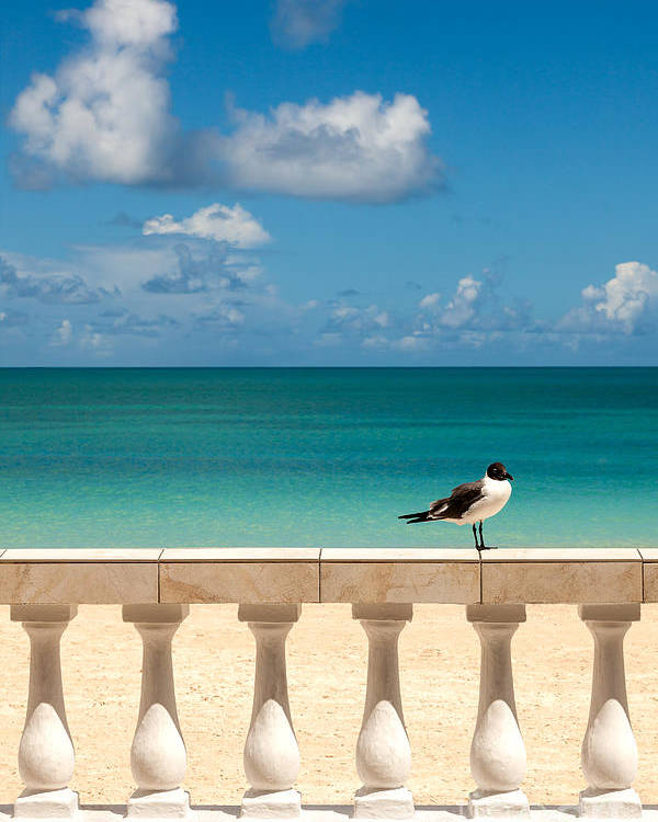 Clouds Poster featuring the photograph Sunny Tropical Seashore With Gull by Sarah Cheriton-Jones
