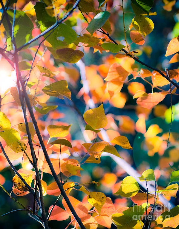 Nature Poster featuring the photograph Sunny Yellow Leaves by Sonja Quintero