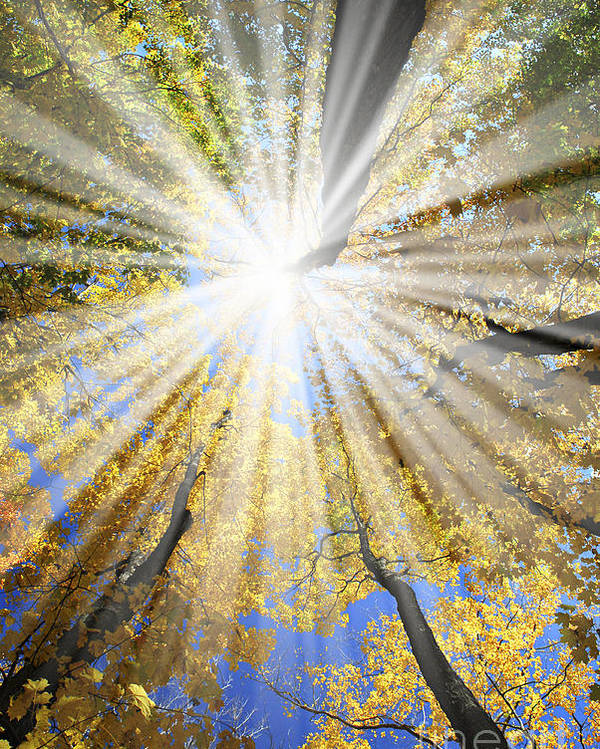 Autumn Poster featuring the photograph Sunrays In The Forest by Elena Elisseeva