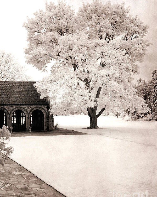 Dreamy Nature Photos Poster featuring the photograph Surreal Dreamy Ethereal Winter White Sepia Infrared Nature Tree Landscape by Kathy Fornal