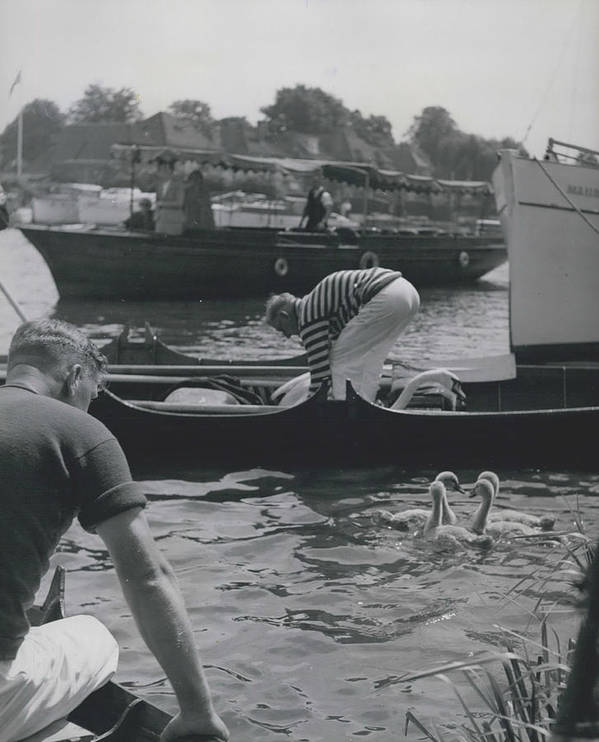 retro Images Archive Poster featuring the photograph Swan Upping Picturesque Ceremony That Has Not Changed For by Retro Images Archive