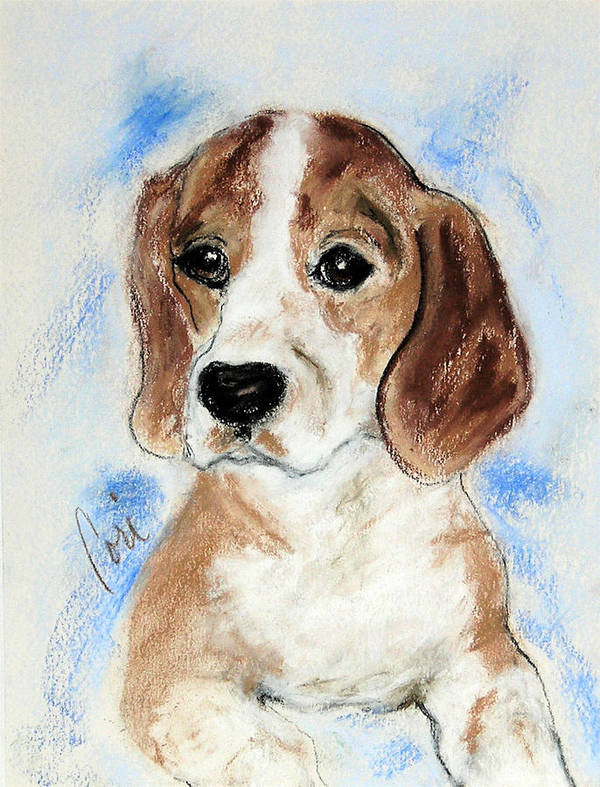 Dog Poster featuring the drawing Sweet Innocence by Cori Solomon