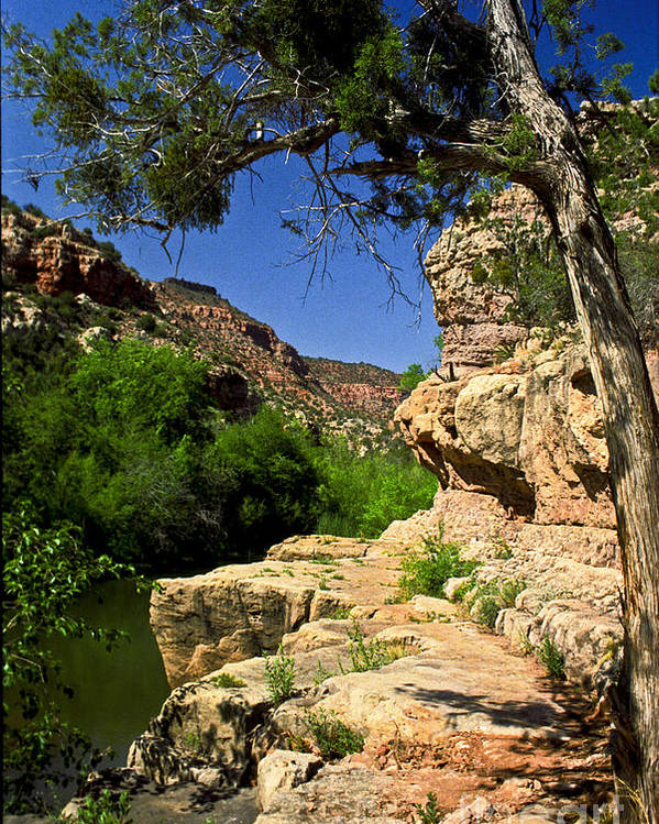 Arizona Poster featuring the photograph Sycamore Canyon by Kathy McClure