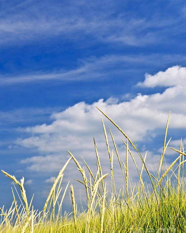 Tall Poster featuring the photograph Tall Grass On Sand Dunes by Elena Elisseeva