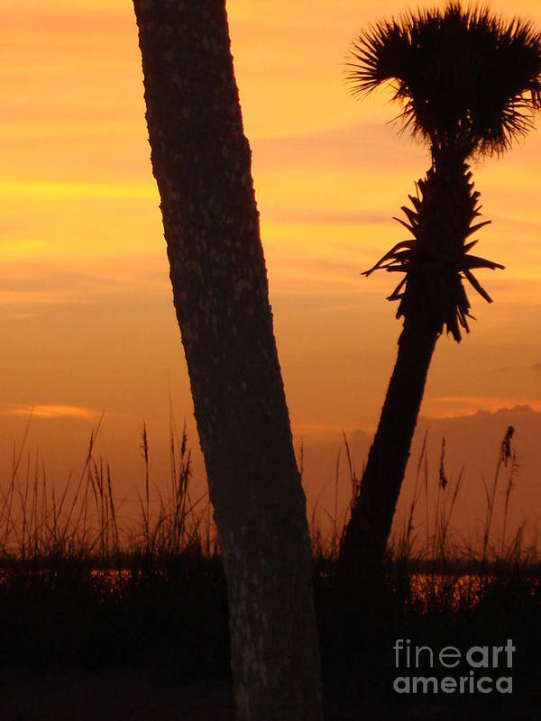 Landscape Poster featuring the photograph Tampa Beach by Aimee Vance