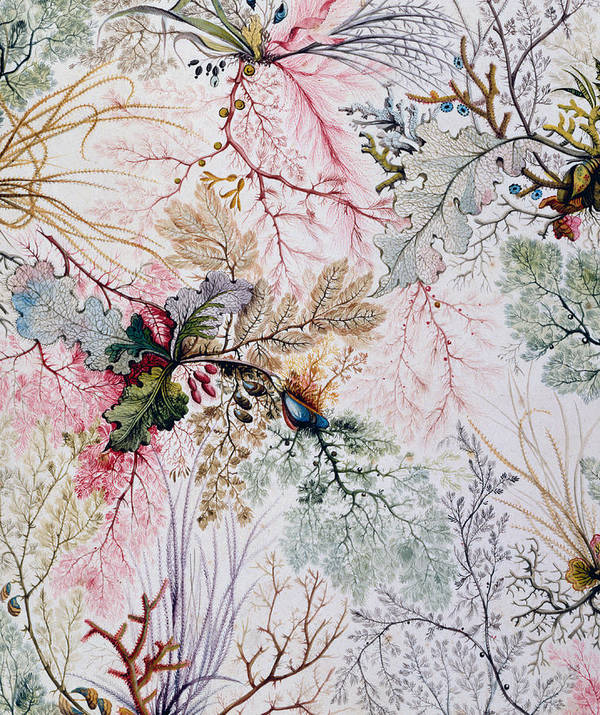 William Poster featuring the painting Textile Design by William Kilburn