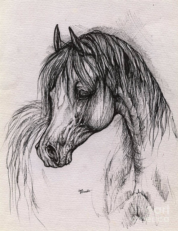 Arabian Horse Poster featuring the drawing The Arabian Horse With Thick Mane by Angel Ciesniarska