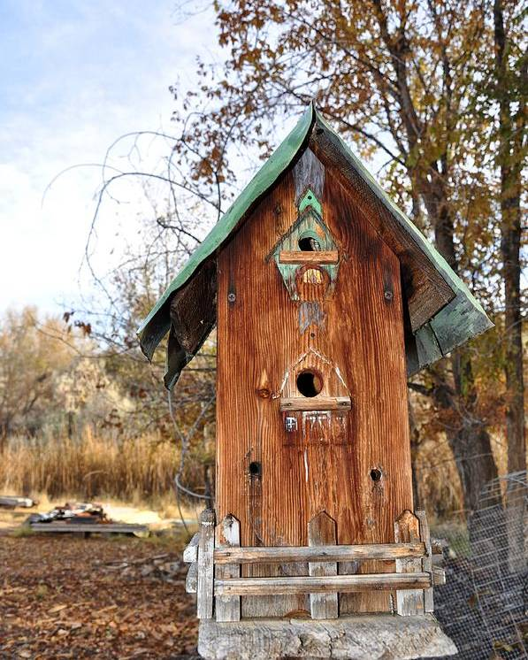 Melba; Idaho; Birdhouse; Shelter; Outdoor; Fall; Autumn; Leaves; Plant; Vegetation; Land; Landscape; Tree; Branch; House; Cross; Poster featuring the photograph The Birdhouse Kingdom - Spotted Towhee by Image Takers Photography LLC - Carol Haddon