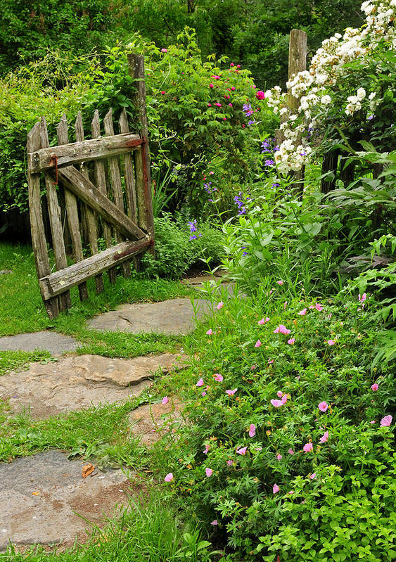 Cottage Poster featuring the photograph The Cottage Garden Walkway by Thomas Schoeller
