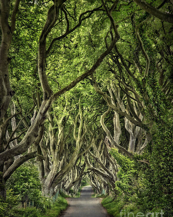 Dark Hedges Poster featuring the photograph The Dark Hedges by Evelina Kremsdorf